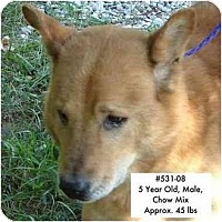 Adopt A Pet :: # 531-08 - RESCUED! - Zanesville, OH
