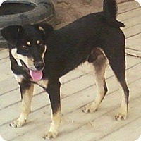 Adopt A Pet :: Simon - Toledo, OH