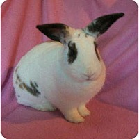 Adopt A Pet :: Alaina - Williston, FL