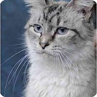 Adopt A Pet :: Miss Mia - Columbus, OH