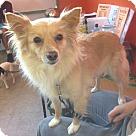 Adopt A Pet :: Harlow