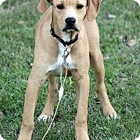 Adopt A Pet :: Carter - Brattleboro, VT
