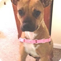Adopt A Pet :: Sequoia-Adopted - Turnersville, NJ