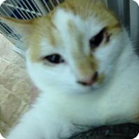 Adopt A Pet :: Moe - Colorado Springs, CO
