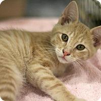 Adopt A Pet :: Schnapps - Sacramento, CA