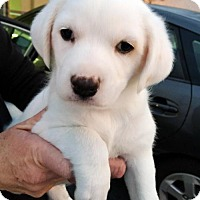 Adopt A Pet :: Journey Pup - Valory - Adopted! - San Diego, CA