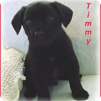 Adopt A Pet :: Timmy-Adoption Pending - Marlborough, MA
