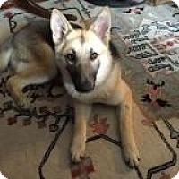 Adopt A Pet :: Lilly - Wichita, KS