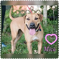 Adopt A Pet :: Mica - hollywood, FL