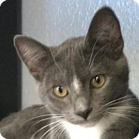 Adopt A Pet :: Daffodil - Winchester, CA