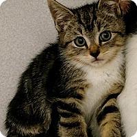 Adopt A Pet :: 165519C - Shoreline, WA