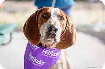 Hound (Unknown Type) Dog for adoption in Logan, Utah - Sherlock