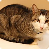 Adopt A Pet :: Edgar - Newtown, CT