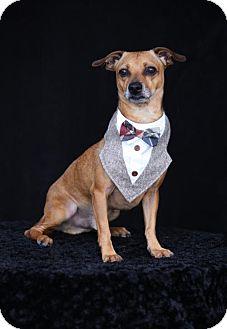 Dachshund Mix Dog for adoption in SAN PEDRO, California - Tanner
