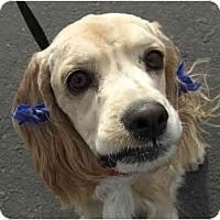 Adopt A Pet :: Lucas - Phoenix, AZ