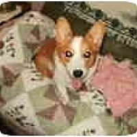 Adopt A Pet :: Calli - Inola, OK