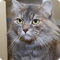 Adopt A Pet :: Priscilla - Irvine, CA