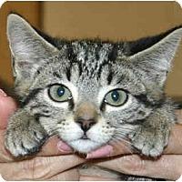 Adopt A Pet :: Princess Leia - Irvine, CA