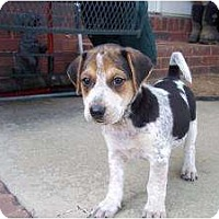 Adopt A Pet :: Buck (adoption pendind) - Adamsville, TN