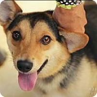 Adopt A Pet :: Rickie - Austin, TX