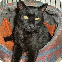 Adopt A Pet :: Midnight - Carmel, NY