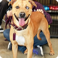 Adopt A Pet :: Zachary - West Los Angeles, CA