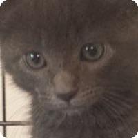 Adopt A Pet :: Nate - Irvine, CA