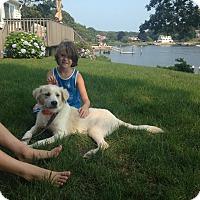 Adopt A Pet :: Frankie - Conway, AR