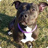 Adopt A Pet :: Brynn - Elderton, PA