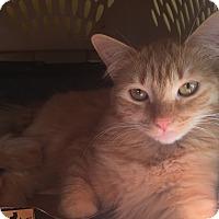 Adopt A Pet :: Chica - Encinitas, CA