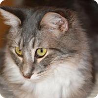 Adopt A Pet :: Pipin - Glendale, AZ