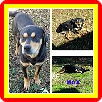 Rottweiler/Hound (Unknown Type) Mix Dog for adoption in Malvern, Arkansas - MAX