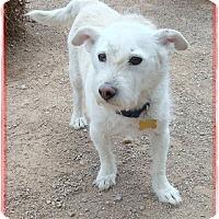 Adopt A Pet :: Pluto - Las Vegas, NV
