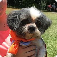 Adopt A Pet :: Barney Lukki - Miami, FL