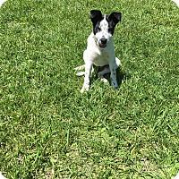 Adopt A Pet :: Keda - New Oxford, PA