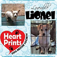Adopt A Pet :: Lionel - Leduc, AB