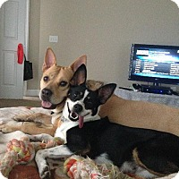 Adopt A Pet :: Selena * URGENT! - Doylestown, PA