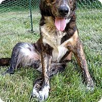 Adopt A Pet :: Shoe - New Oxford, PA
