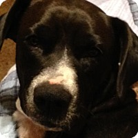 Adopt A Pet :: Angel - Union Grove, WI