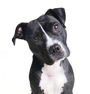 Pit Bull Terrier Mix Dog for adoption in Wilmington, Delaware - Jade
