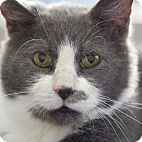 Adopt A Pet :: Clint - LaGrange, KY