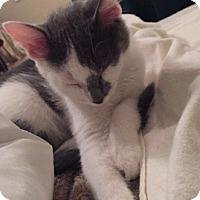 Adopt A Pet :: Leo - Middleton, WI