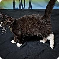Adopt A Pet :: Lizzie - Norman, OK
