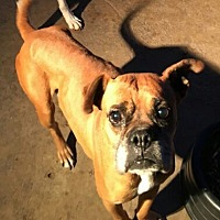 Adopt A Pet :: Tribeca - Austin, TX