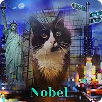 Adopt A Pet :: Nobel - Bedford Hills, NY