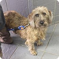 Adopt A Pet :: Max - Hillsboro, IL