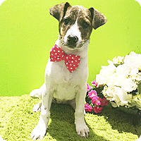 Adopt A Pet :: Dita - Castro Valley, CA