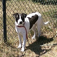 Adopt A Pet :: Pokey - O'Fallon, MO