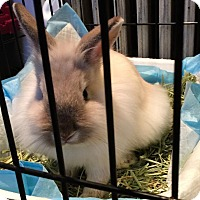 Adopt A Pet :: Snow White (and Foo Foo) - Worcester, MA