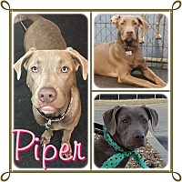 Adopt A Pet :: Pieper - Louisiana, MO